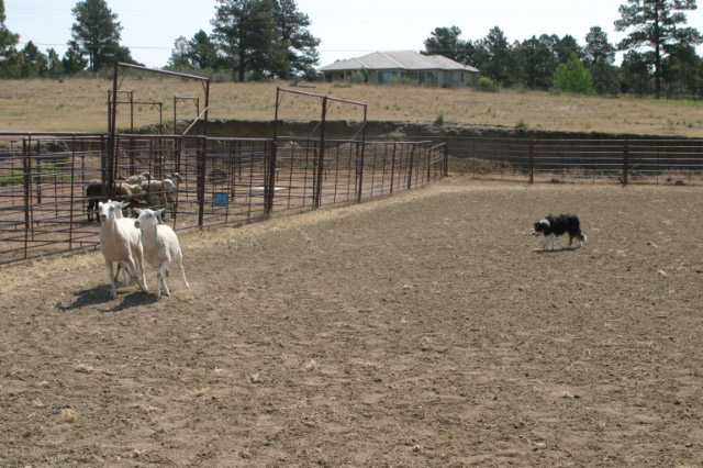 Tomahawk Ranch And Kennel Upcoming Events